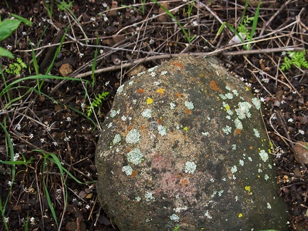 lichens-on-rock-Malibu-Springs-trail-2013-01-27-IMG 3339