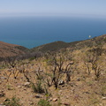view-south-facing-hillside-regenerating-one-year-after-fire-Chumash-2014-06-02-IMG_3965.jpg