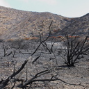 2013-05-09-strongly-burned-areas-Springs-Fire-Chumash-IMG 0736