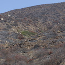 2013-05-26-small-unburned-patch-leeward-downslope-Chumash-IMG 0907