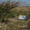 Fouquieria-splendens-ocotillo-and-tent-Slot-Canyon-area-2009-03-08-CRW 7888