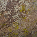 lichens-Blair-Valley-pictographs-Anza-Borrego-2010-03-29-IMG 4144