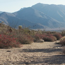 view-and-chuparosas-Rainbow-Canyon-trailhead-2012-02-18-IMG 0558