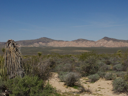 view-of-valley-creosote-bush-scrub-N-of-Cottonwood-Center-Pinto-Basin-Rd-Joshua-Tree-NP-2017-03-16-IMG 7674