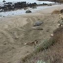 Elephant-Seal-Beach-2012-12-15-IMG 6962