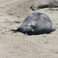 seals-on-beach-2009-05-21-CRW 8093