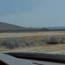 photovoltaic-arrays-destroying-poppy-fields-170thStW-2014-04-20-IMG 3576