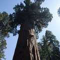 General-Sherman-tree-SequoiaNP-2012-07-06-IMG_5976.jpg