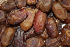 dates-Honey-Date-Palm-Oasis-Mecca-2016-03-04-IMG 2823