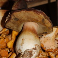 king-bolete-Oregon-2014-11-09-IMG 0282.