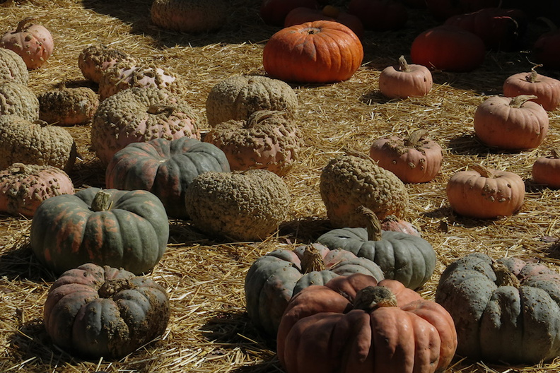 pumpkins-Underwood-Farms-2014-10-19-IMG_4164.jpg