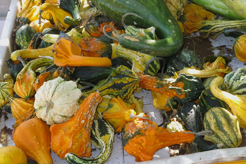 pumpkins-gourds-Underwood-Farms-2014-10-19-IMG_4166.jpg