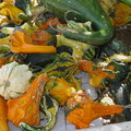 pumpkins-gourds-Underwood-Farms-2014-10-19-IMG 4166