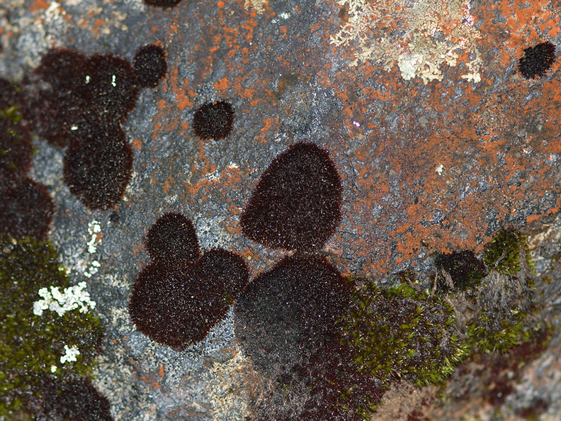 black-moss-on-red-rocks-Taranaki-Falls-trail-Tongariro-24-06-2011-IMG_2524.jpg