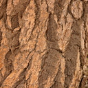 Douglas-fir-bark-Bryce-2005-07-25