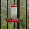 hummingbirds-at-feeder-2014-11-13-IMG 4206