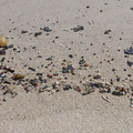 oil-tar-fragments-washed-up-on-Ormond-Beach-2013-04-15-IMG_0539.jpg