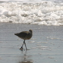 willets-near-surf-2006-04-07-img 2464