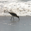 willets-near-surf-2006-04-07-img 2467
