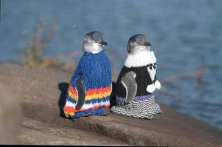 little blue penguins in knitted sweaters, looking alert and important. Original photographer unknown.