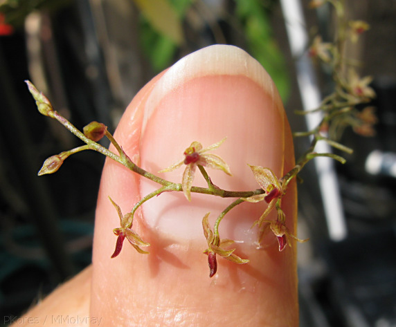 tiny orchid, much smaller than the thumb nail in the background