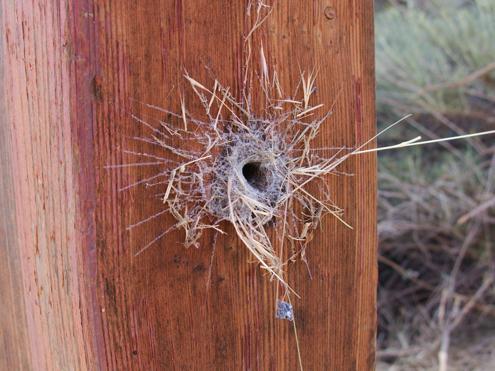 funnel-web-in-drilled-bolt-hole-Angel-Vista-2018-05-15-IMG 8754