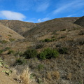 drought-and-after-Spring-Fire-before-it-rained-Ray-Miller-Trail-Pt-Mugu-2015-12-28-IMG_6441.jpg