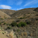 drought-and-after-Spring-Fire-before-it-rained-Ray-Miller-Trail-Pt-Mugu-2015-12-28-IMG 6441