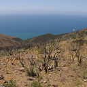 view-south-facing-hillside-regenerating-one-year-after-fire-Chumash-2014-06-02-IMG 3965