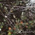 dew-on-webs-Chumash-trail-Pt-Mugu-2012-08-23-IMG 2703