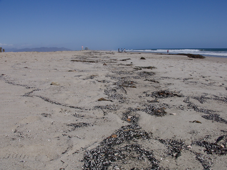 2013-05-07-Springs-Fire-ashes-washing-up-at-Pt-Hueneme-beach-IMG 0711