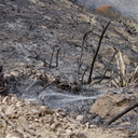 2013-05-09-new-spider-web-Day5-after-Springs-Fire-Chumash-IMG 0746