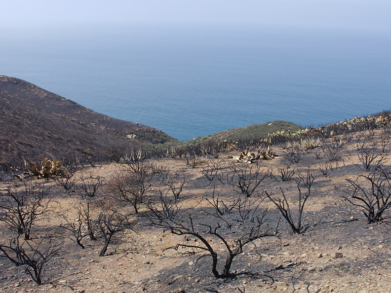 2013-05-26-unburned-leeward-valley-refugium-Chumash-IMG 0904