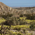 view-flowering-fields-Hawk-Canyon-afternoon2009-03-08-CRW 7938