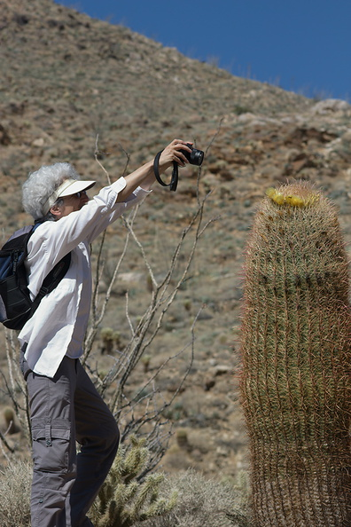 photographing-the-photographers-of-Ferocactus-cylindraceus-Rainbow-Canyon-2012-02-18-IMG 3956