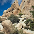 Nolina-parryi-and-rock-formations-Barker-Dam-trail-Joshua-Tree-2011-11-13-IMG 3573
