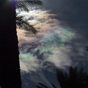 iridescent-clouds-at-Oasis-date-farm-2010-11-19-IMG 6546