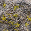 lichen-fluorescent-green-Hidden-Valley-Joshua-Tree-2011-11-12-IMG 0109