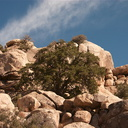 rock-formations-Barker-Dam-Trail-Joshua-Tree-2011-11-13-mriley-CRW 9042