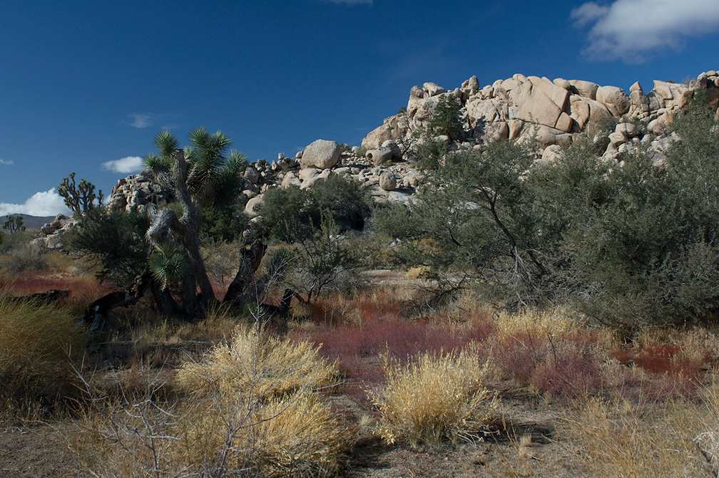 view-rock-formations-Barker-Dam-trail-Joshua-Tree-2011-11-13-IMG 3550