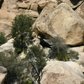 juniper-trees-growing-in-rock-barker-dam-2008-03-29-img 6796