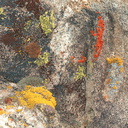 lichens-yellow-red-green-on-rock-High-View-loop-Black-Rock-Joshua-Tree-2013-02-17-IMG 7461