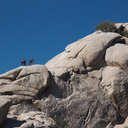 rock-climbers-on-every-knob-Hidden-Valley-Joshua-Tree-2012-03-15-IMG 1253