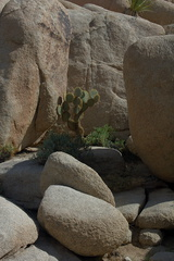 rock-formations-and-cactus-Barker-Dam-Joshua-Tree-2012-03-16-IMG 4579