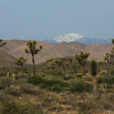 view-joshua-trees-and-snow-mountains-north-Joshua-Tree-2010-04-17-IMG 0328
