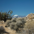 view-of-snow-covered-San-Gorgonio-High-View-loop-Black-Rock-Joshua-Tree-2013-02-17-IMG 7474
