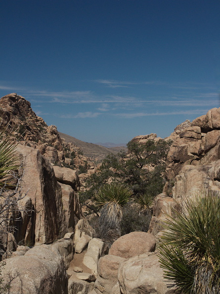 view-trail-Hidden-Valley-Joshua-Tree-2012-03-15-IMG_1236.jpg