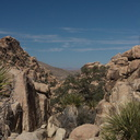view-trail-Hidden-Valley-Joshua-Tree-2012-03-15-IMG 1236