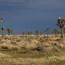 rainclouds-behind-sunlit-Joshua-trees-near-Sheeps-Pass-Joshua-Tree-NP-2016-03-05-IMG 6614
