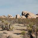 rock-formations-mid-Joshua-Tree-NP-2017-01-02-IMG 3712